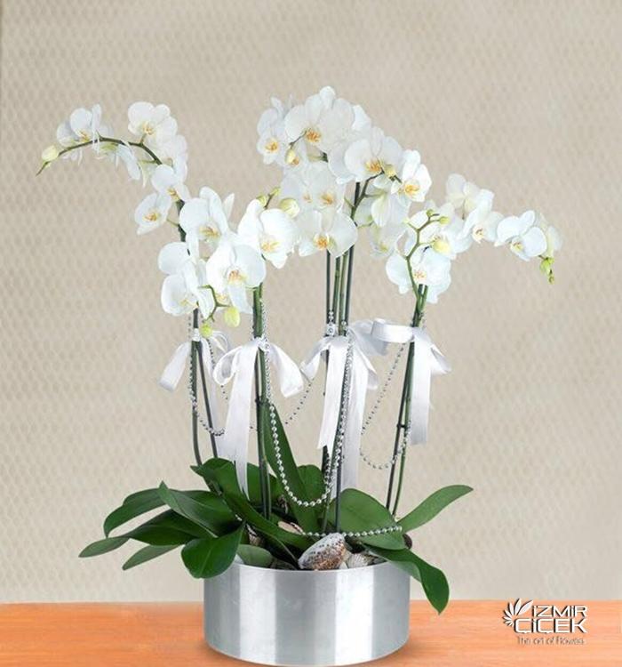 Galvaniz Altlıkta Orkideler
