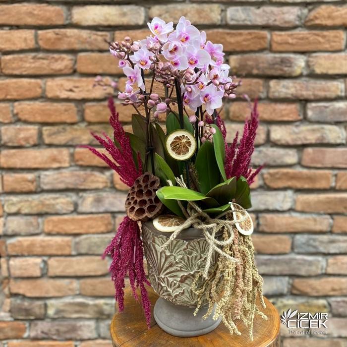 Seramikte Multi Orkideler