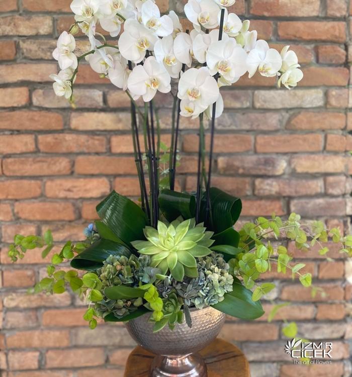 Orkide Bahçesi 6 Dal