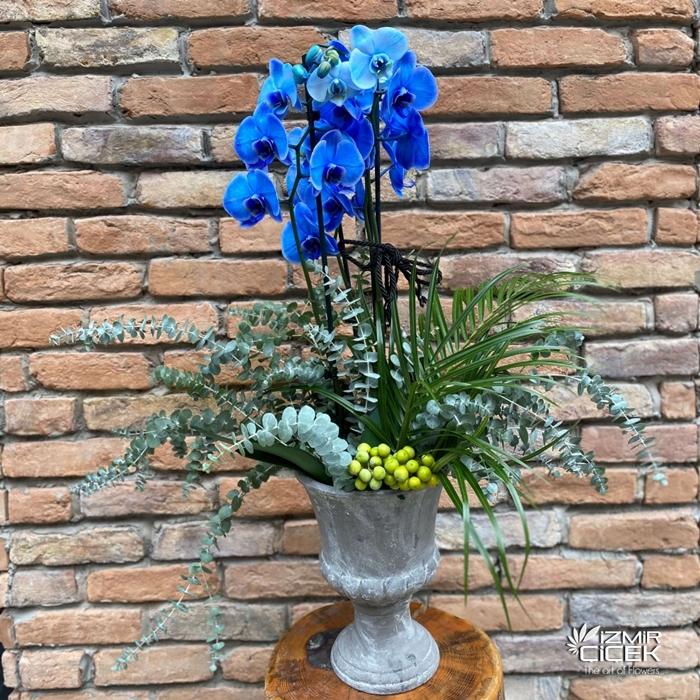 Seramikte Mavi Orkide