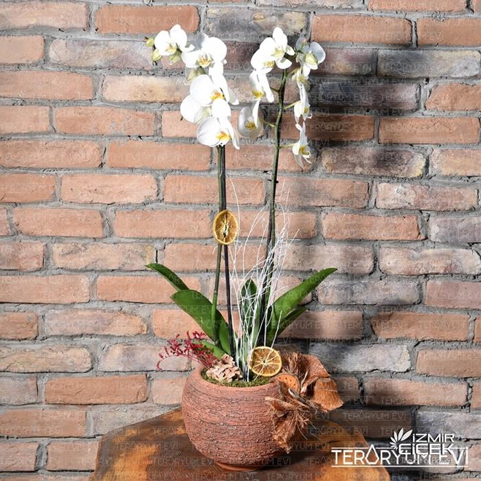 Sevgililer Günü 2 Dallı Orkide