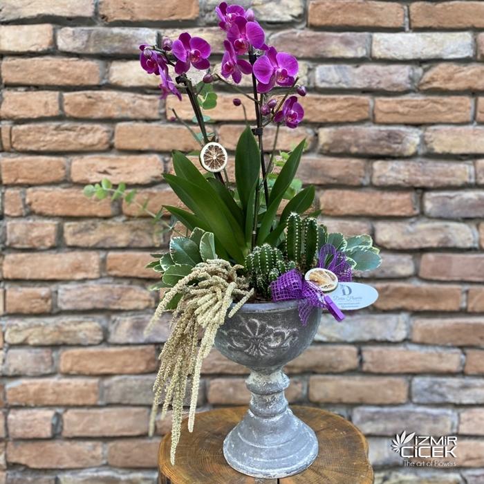Özel Tasarım Orkide