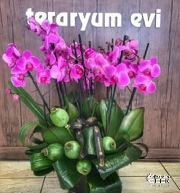 Saksı Orkide Tasarım
