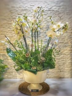 Orkidem