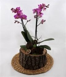 Kütükte Orkide Tasarım