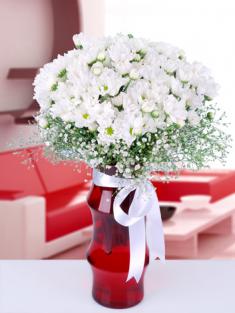beyaz kır çiçekleri izmir