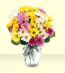 Vazoda Renkli Kır Çiçekleri