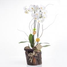 Orkide ve Sukulent