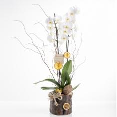 Kütükte Beyaz Orkidem