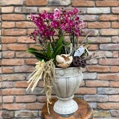 Multi Orkide Tasarım