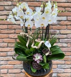 10 Dallı Beyaz Orkide