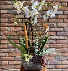 4 Dallı Beyaz Jumbo Orkide