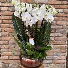 10 Dal Orkide Bahçesi
