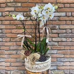 Antik Seramik 4 Dal Orkide