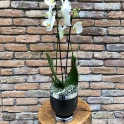 Fiber Vazoda Orkide