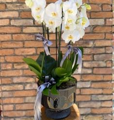 6 Dal Orkide Bahçesi