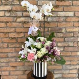 Kutuda Orkide ve Aranjman