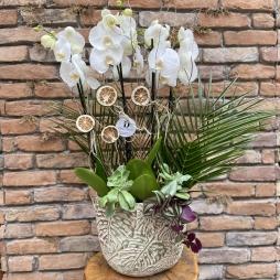 Seramikte 4 Dal Jumbo Orkide