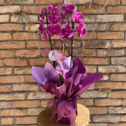 Özel Fuşya Orkide Tasarım