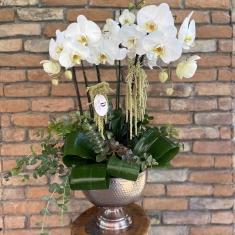 6 Dallı Tasarım Orkide