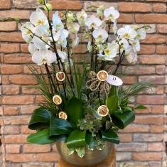 10 Dal Orkide Tasarım