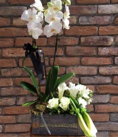 Orkide ve Çiçek